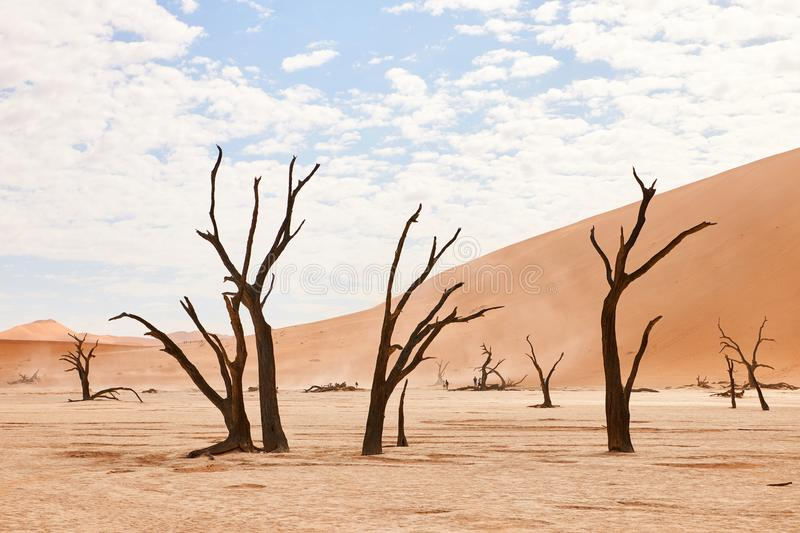 Dead trees in Namibia stock photo