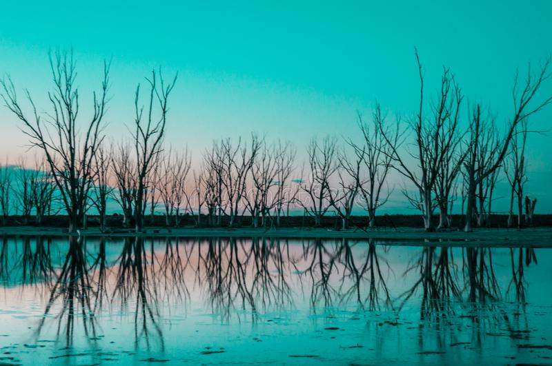 Dead trees reflected in the water royalty free stock image