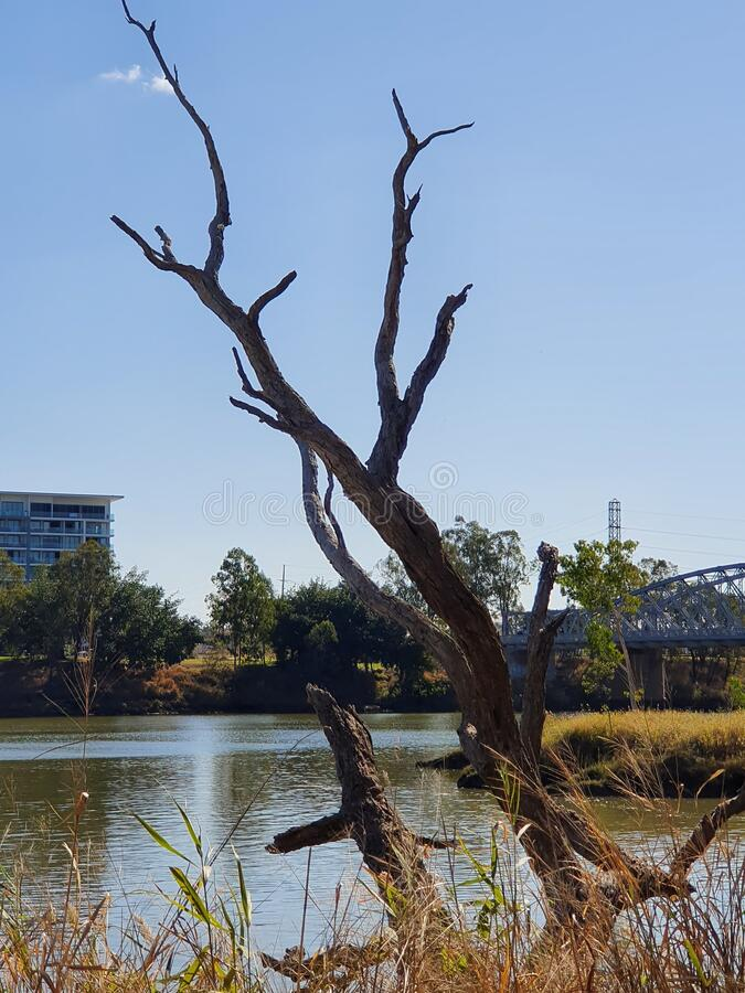 Dead trees river water qld stock photography