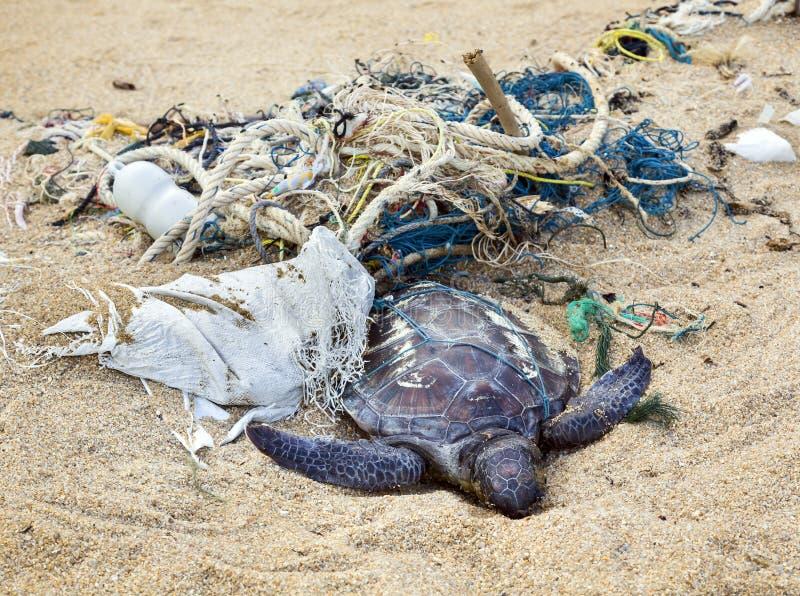 Dead turtle in fishing nets. Dead turtle entangled in fishing nets on the ocean