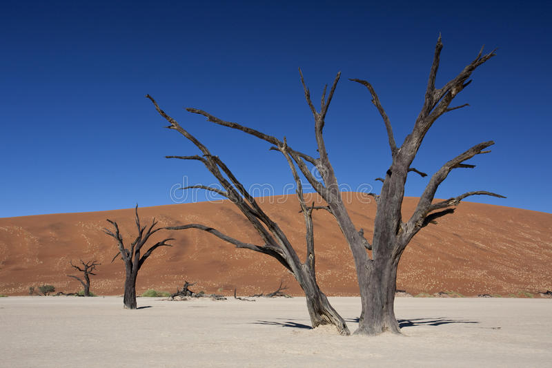Dead Vlei - Sossusvlei - Namibia royalty free stock image