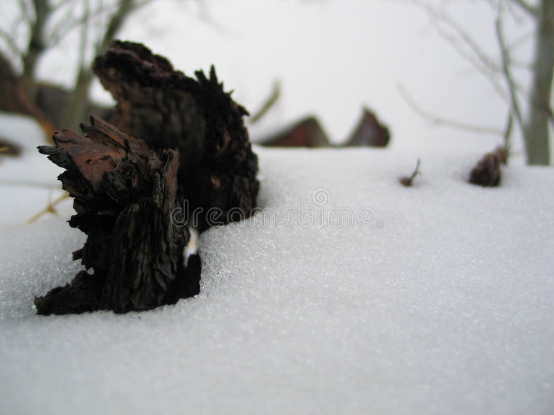 Download The dead of winter stock image. Image of forgotten, stump - 1413