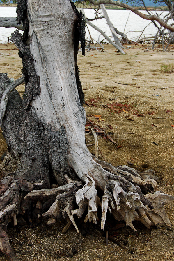 Dead wood royalty free stock images