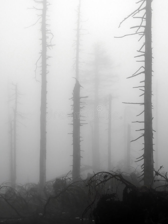 Dead wood stock image