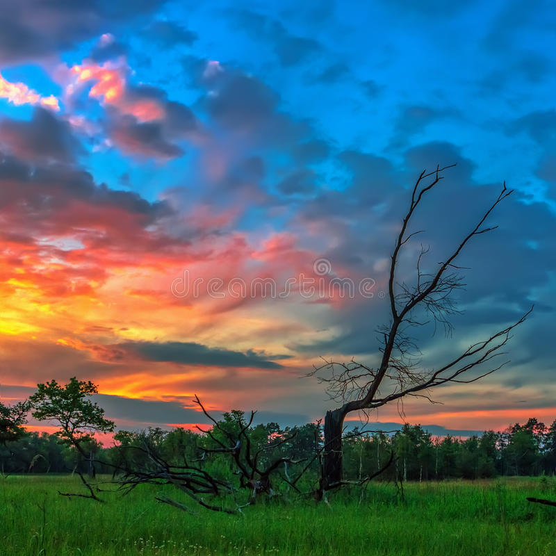 Dead wood on a background of dramatic sunset royalty free stock images