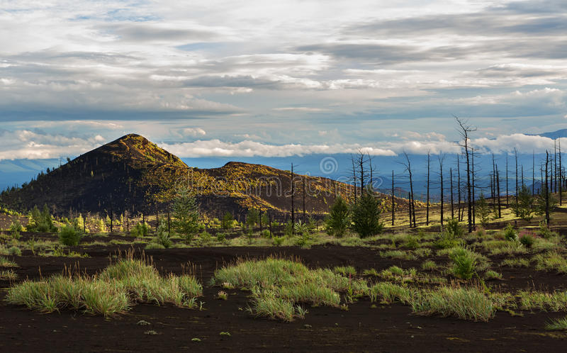 Dead wood - a consequence of a catastrophic release of ash during the eruption of the volcano in 1975 Tolbachik north. Breakthrough - Kamchatka stock image