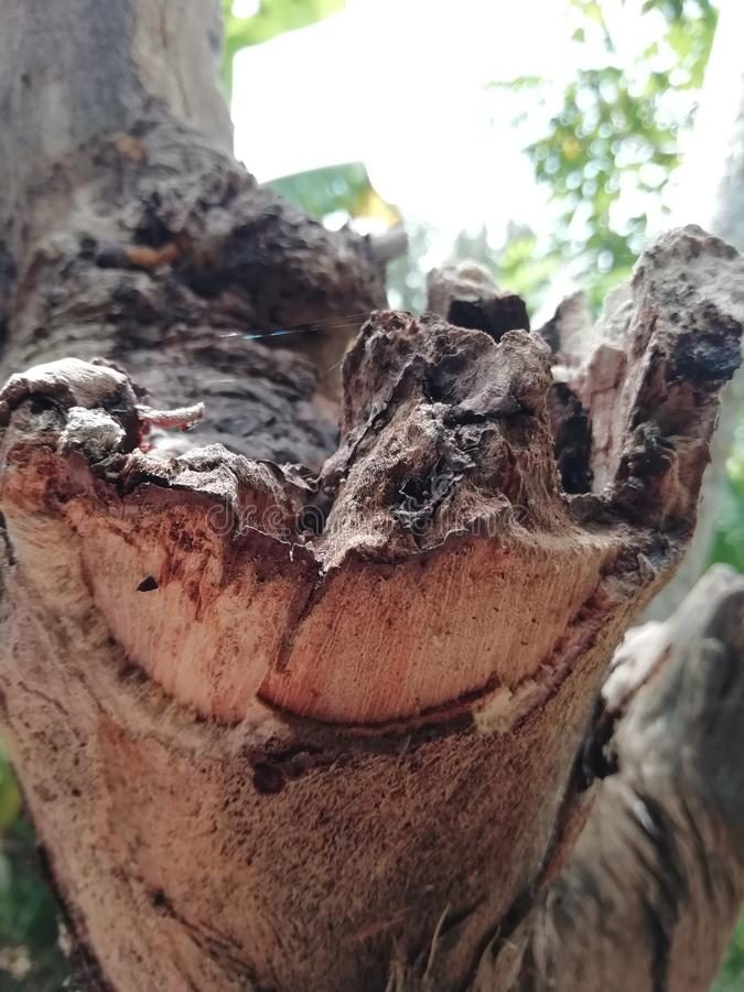 Dead wood stock photos