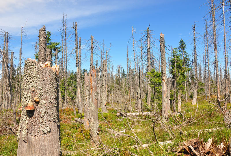 Dead wood in national park Bavarian Forest stock photography