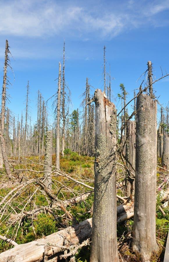 Dead wood in national park Bavarian Forest. Colorful and crisp image of dead wood in national park Bavarian Forest royalty free stock photography