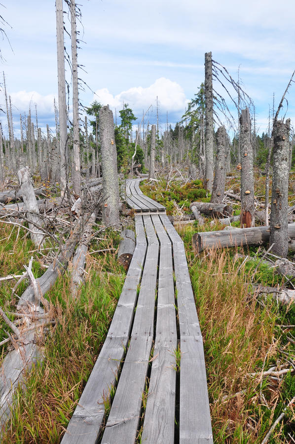 Dead wood in national park Bavarian Forest stock photos