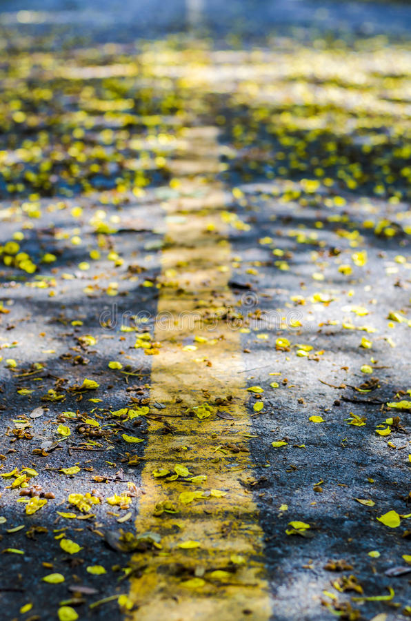 Dead yellow flowers on the road. An image of a lot of little dead yellow flowers on the road stock photography