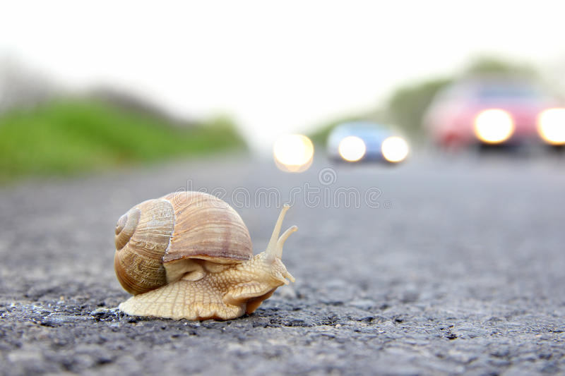 Deadly crossing a road royalty free stock images