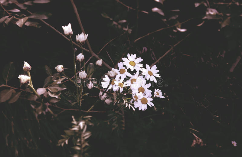 Deadly Flowers royalty free stock photos