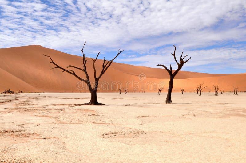 deadvleiökennamib namibia royaltyfri fotografi