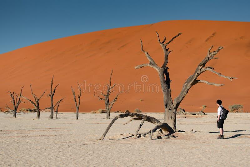 deadvlei的,纳米比亚亚裔摄影师 免版税库存照片