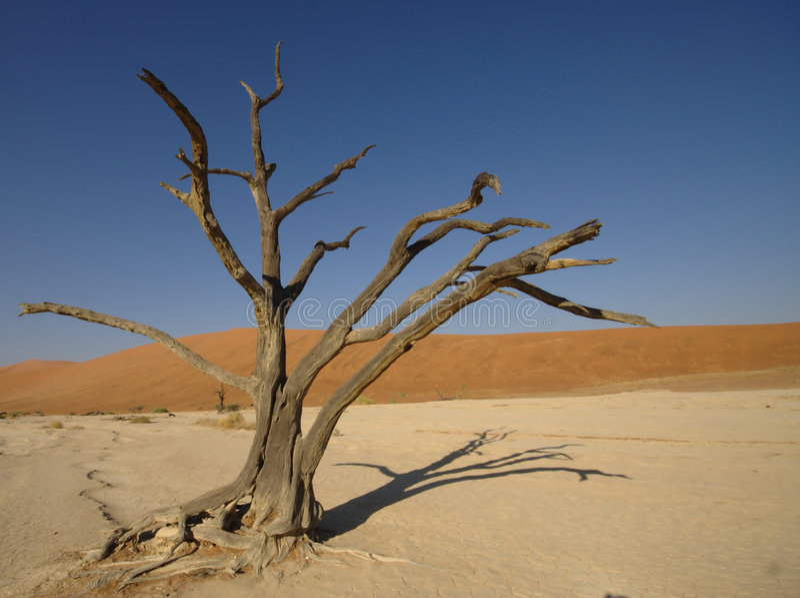 Deadvlei Baum stockfotografie