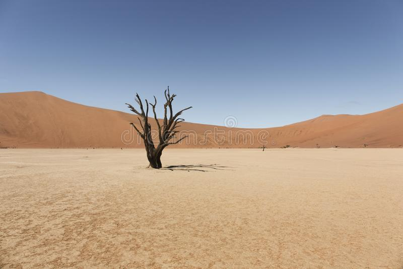 Deadvlei del desierto de namib de Namibia imagen de archivo