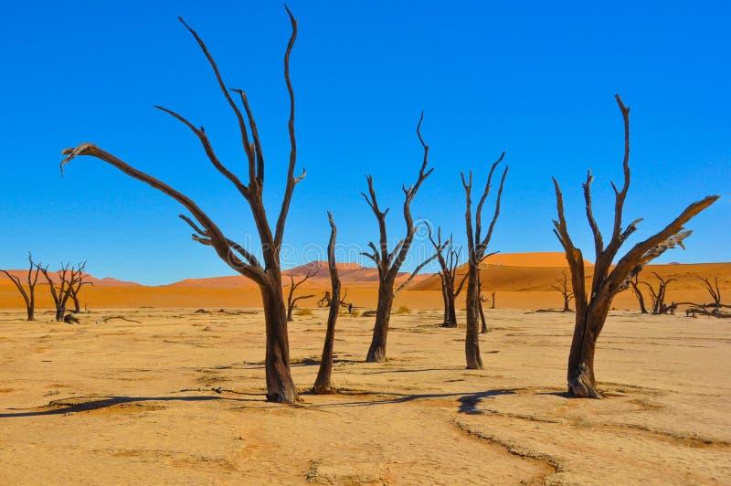 Deadvlei in der Namibischen Wüste lizenzfreie stockfotos