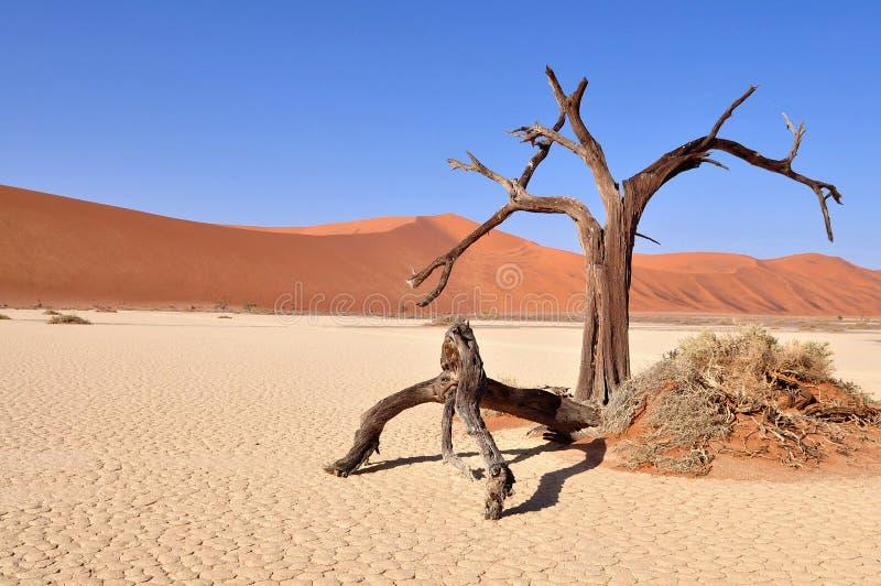 Deadvlei, desierto de Namib fotografía de archivo libre de regalías