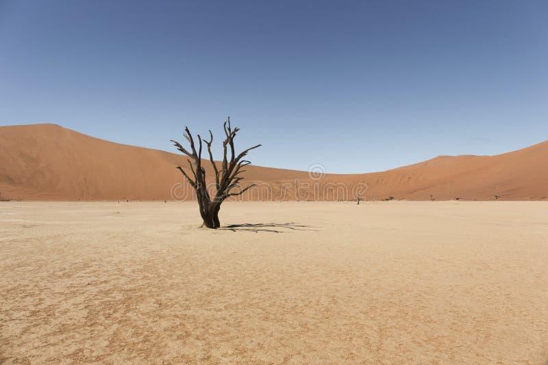 Deadvlei do deserto de namib de Namíbia imagens de stock royalty free
