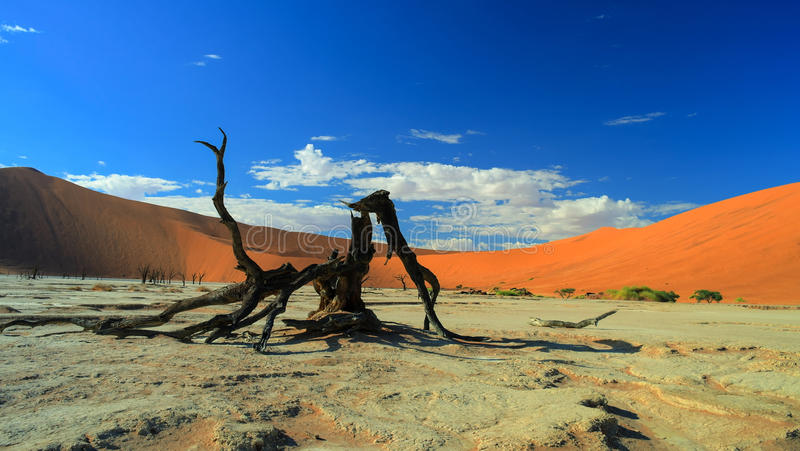 Deadvlei en parc national de Namib-Naukluft, Sossusvlei Namibie photo stock