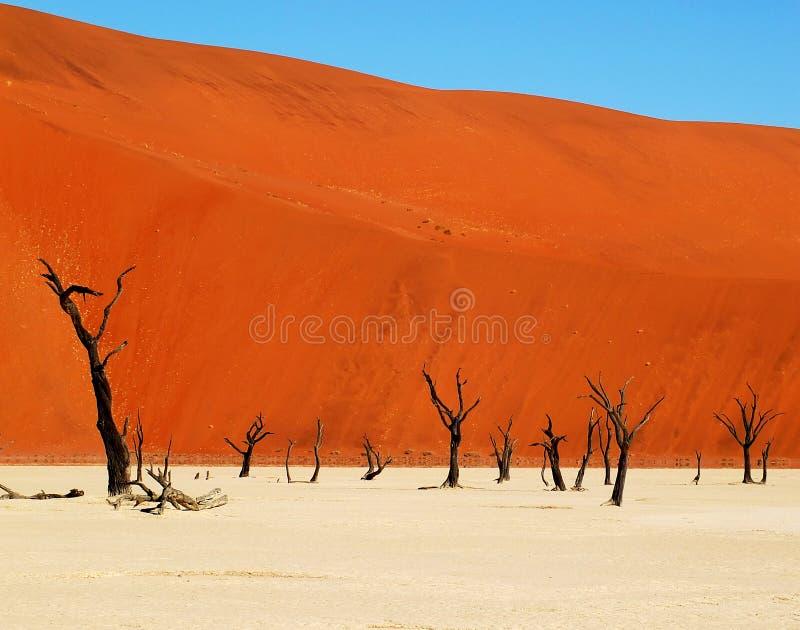 Deadvlei - Namib öken arkivbilder