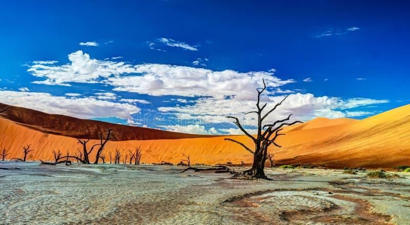 Deadvlei in Namib-Naukluft national park, Sossusvlei, Namibia stock photography