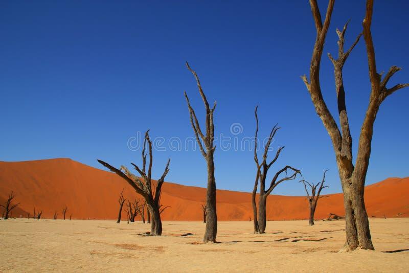 Deadvlei Namib-Naukluft nationalpark Namibia royaltyfri bild