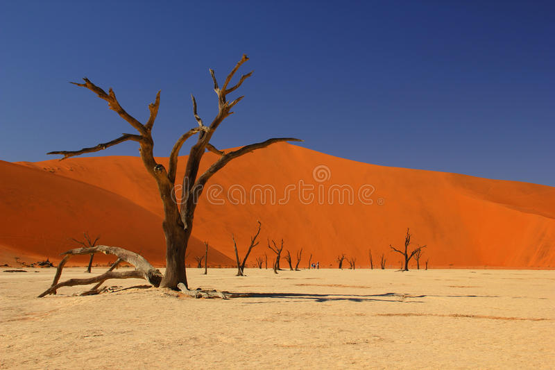 Deadvlei, Namibië royalty-vrije stock afbeelding