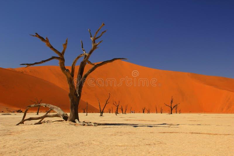 deadvlei namibia royaltyfri bild
