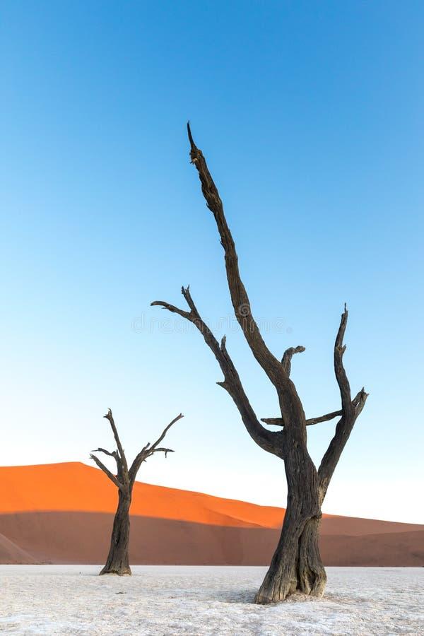 Deadvlei, Namibia fotos de archivo