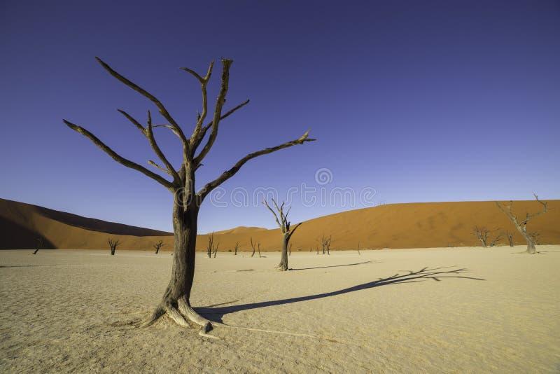 Deadvlei, o Vlei muerto, en Sossusvlei, en el par de Namib-Naukluft imagen de archivo