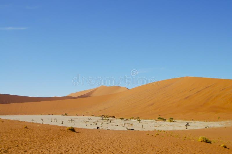 Deadvlei - Sossusvlei - la Namibie photo libre de droits