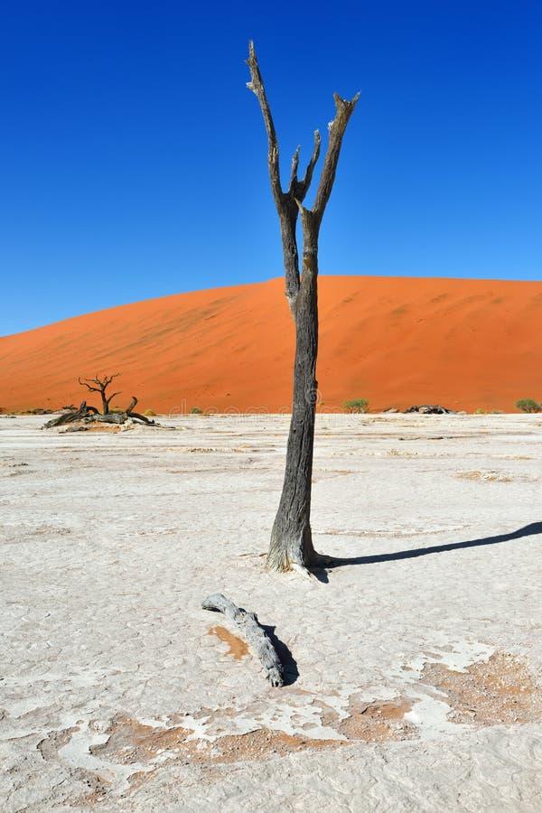 Deadvlei, Sossusvlei. Namib-Naukluft National Park, Namibia royalty free stock photos