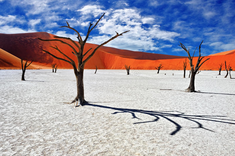 Deadvlei Sossusvlei Namibia royaltyfri foto