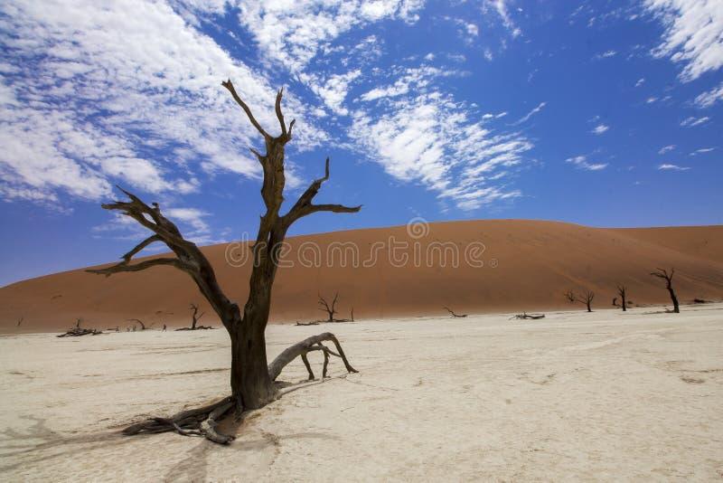 Deadvlei, Sossusvlei, Namibie photographie stock