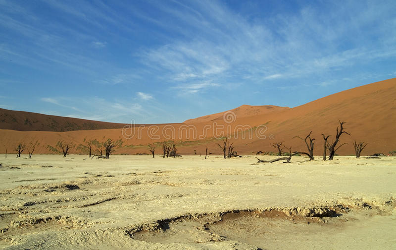 Download Deadvlei Trees stock image. Image of travel, panorama - 11363431