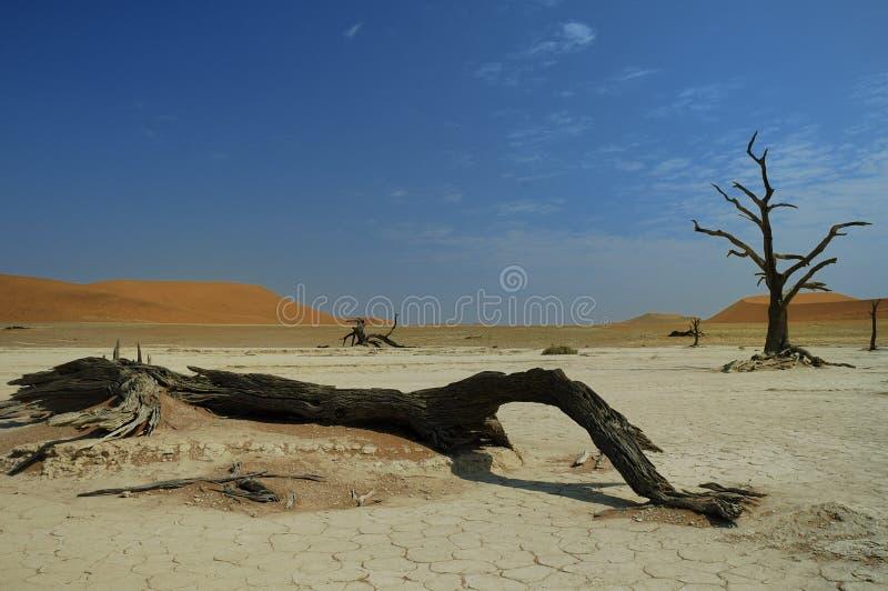 Deadvlei (woestijn Namib) royalty-vrije stock afbeelding
