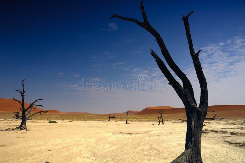 Deadvlei (woestijn Namib) royalty-vrije stock foto's