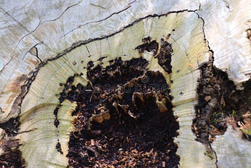 deadwood fotografia de stock