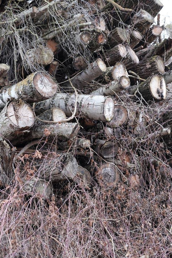deadwood imagem de stock