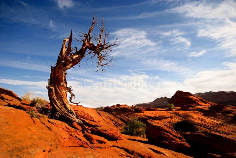 Deadwood stock foto's