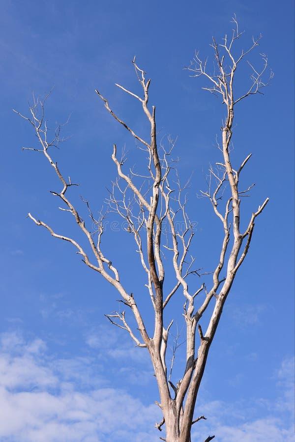 deadwood foto de stock