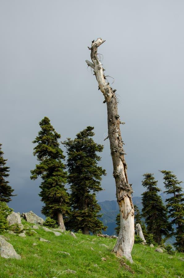 deadwood imagem de stock royalty free