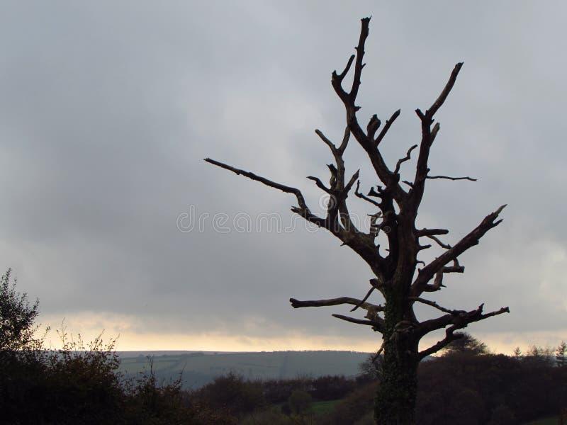 deadwood fotos de stock royalty free