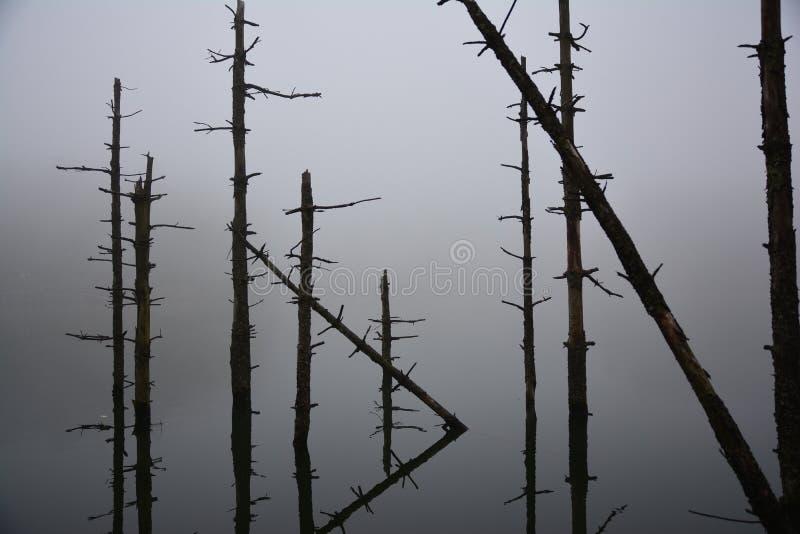 deadwood royaltyfri foto