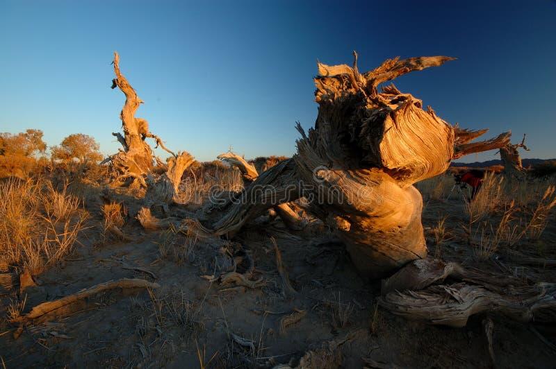 Deadwood in de ochtend stock afbeelding