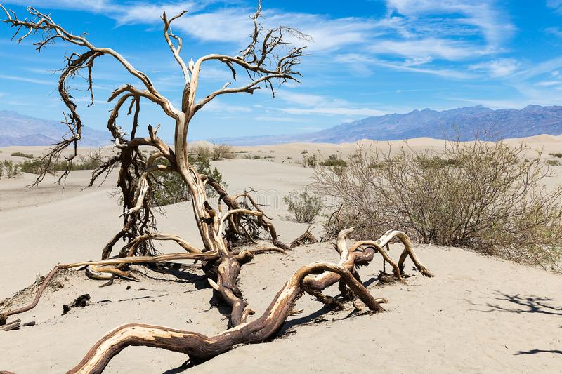 Deadwood in Death Valley National Park, California, Nevada, USA royalty free stock images