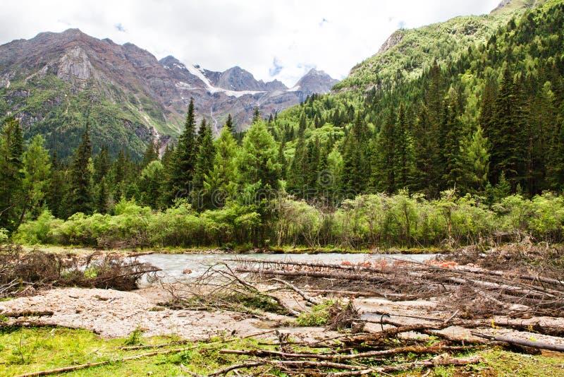 Deadwood in het de oud-groeibos stock afbeelding