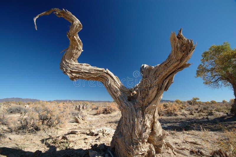 Deadwood i den blåa skyen arkivbild